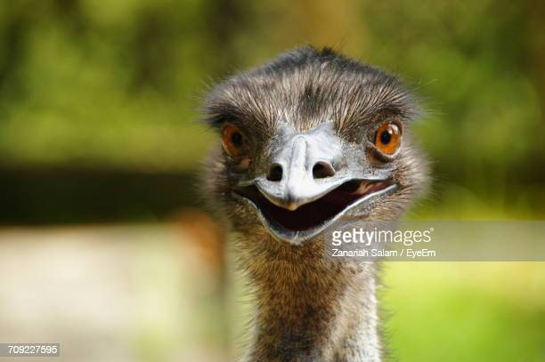 close-up of funny ostrich - ostrich stock pictures, royalty-free photos & images