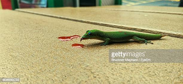 Close-Up Of Gecko On Table