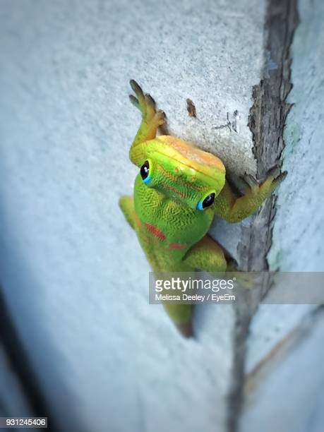 close-up of gecko on wall - geco foto e immagini stock
