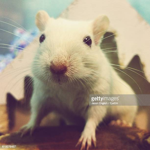 close-up of gerbil in container - gerbil - fotografias e filmes do acervo