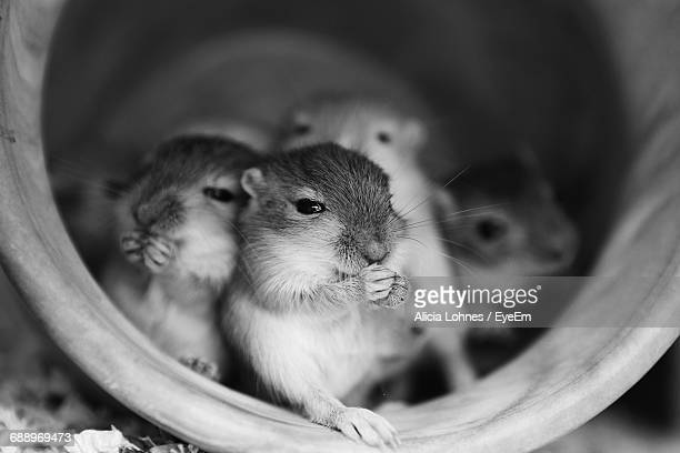 close-up of gerbils in container - gerbil - fotografias e filmes do acervo