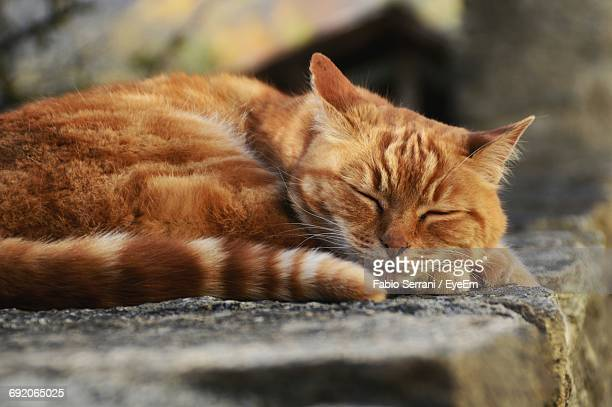 Close-Up Of Ginger Cat Sleeping On Retaining Wall