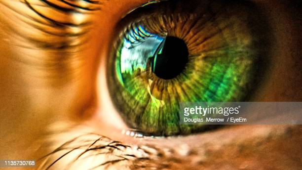 close-up of girl green eye - green eyes stock pictures, royalty-free photos & images