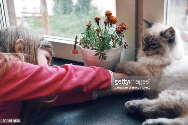 close-up of girl with cat at home - persian girl stock photos and pictures