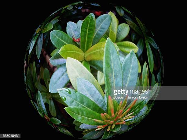 Close-Up Of Glass Globe In Green Plant