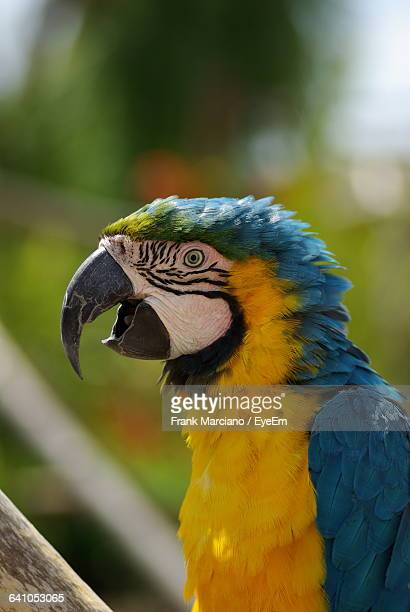 Close-Up Of Gold And Blue Macaw On Sunny Day