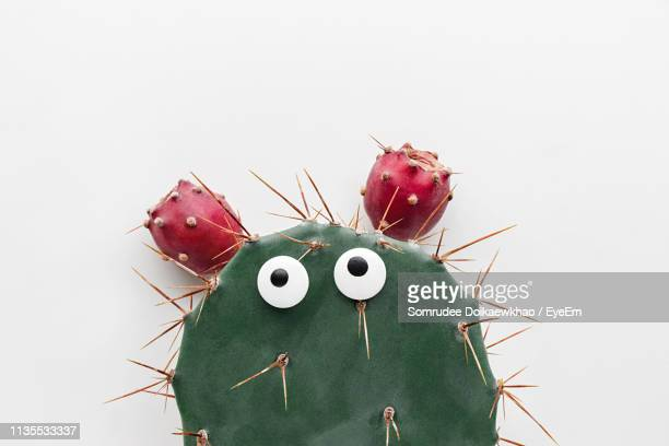 close-up of googly eyes on cactus over white background - googly eyes stock pictures, royalty-free photos & images