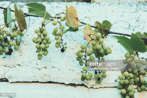 Close-Up Of Grapes Growing On Plant Against Wall