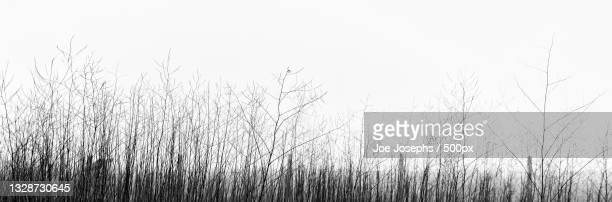 close-up of grass against clear sky,cayucos,california,united states,usa - cayucos stock pictures, royalty-free photos & images