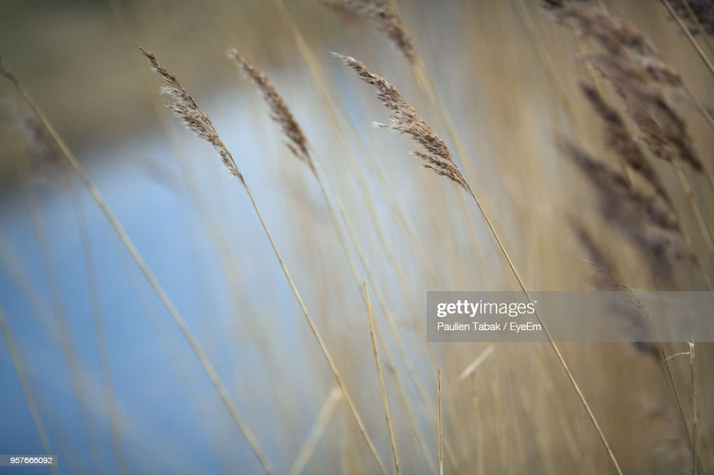 Close-Up Of Grass Against Sky : Stockfoto