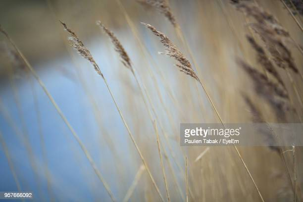 close-up of grass against sky - paulien tabak stock-fotos und bilder
