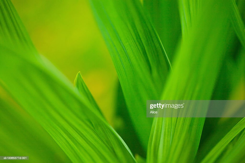 Close-up of grass blades : Foto stock