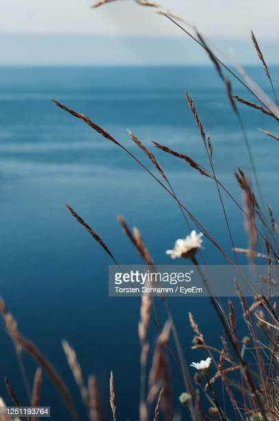 close-up of grass by sea against sky - helgoland stock pictures, royalty-free photos & images
