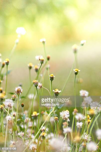 Close-Up Of Grass Flower Against Blurred Green Background