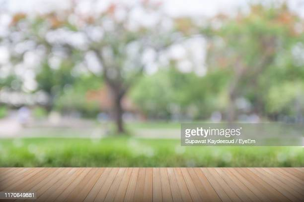 close-up of grass growing in park - focus on foreground stock pictures, royalty-free photos & images