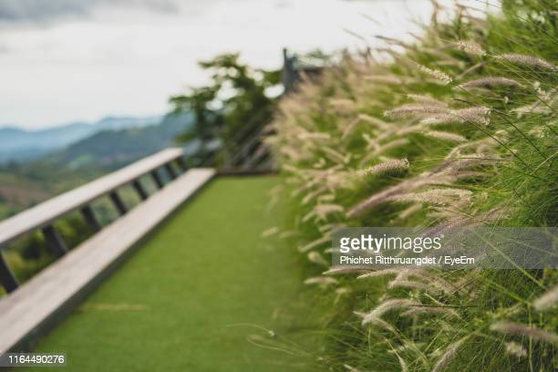 close-up of grass growing on field - phichet ritthiruangdet stock photos and pictures