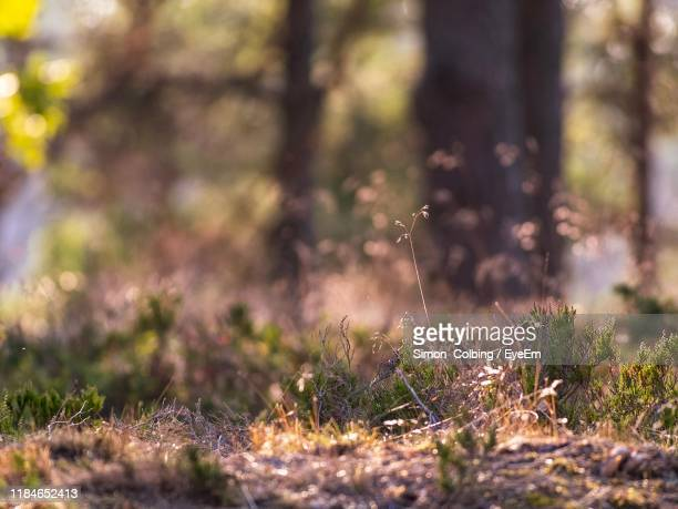 close-up of grass growing on field - colbing stock pictures, royalty-free photos & images
