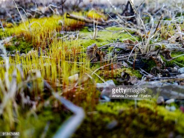 close-up of grass growing on field - amanda marsh stock pictures, royalty-free photos & images