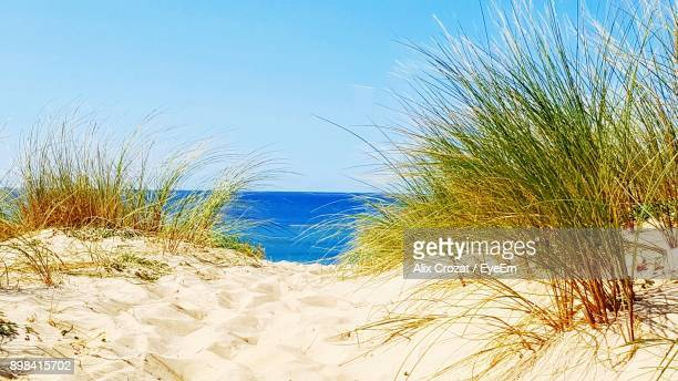 Close-Up Of Grass On Beach Against Clear Blue Sky