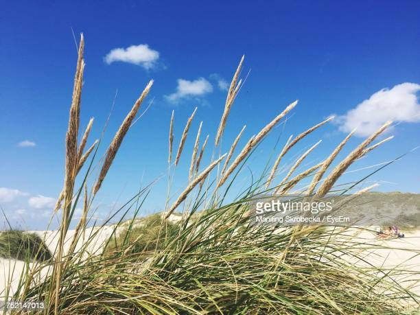Close-Up Of Grass On Beach Against Sky