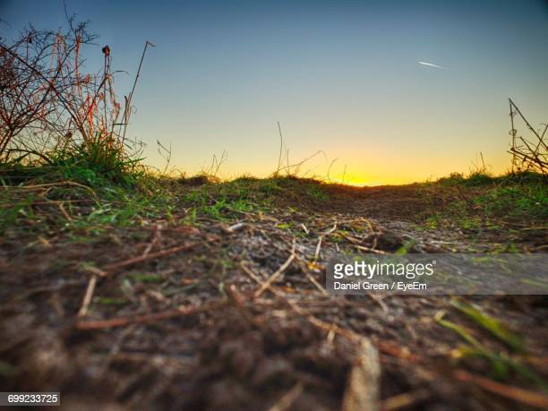 close-up of grass on field against sky during sunset - aylesbury stock photos and pictures