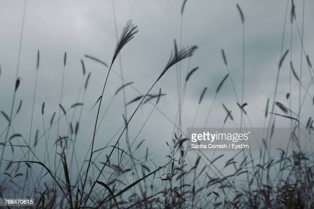 close-up of grass on field against sky - sasha gray stock photos and pictures