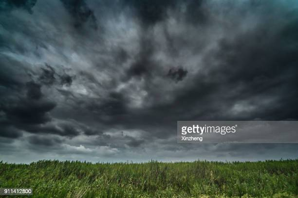 close-up of grass on field against sky - nube temporalesca foto e immagini stock