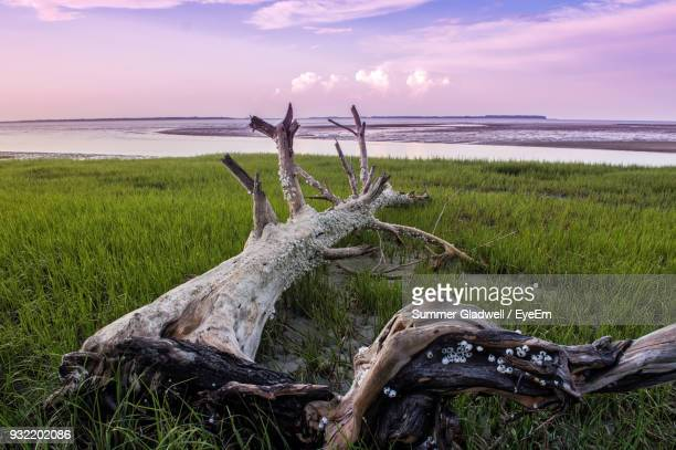 close-up of grass on field by sea against sky - hilton head stock pictures, royalty-free photos & images