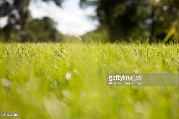 close-up of grass on field - regina saskatchewan stock pictures, royalty-free photos & images