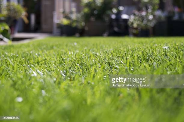 close-up of grass on field - pelouse photos et images de collection