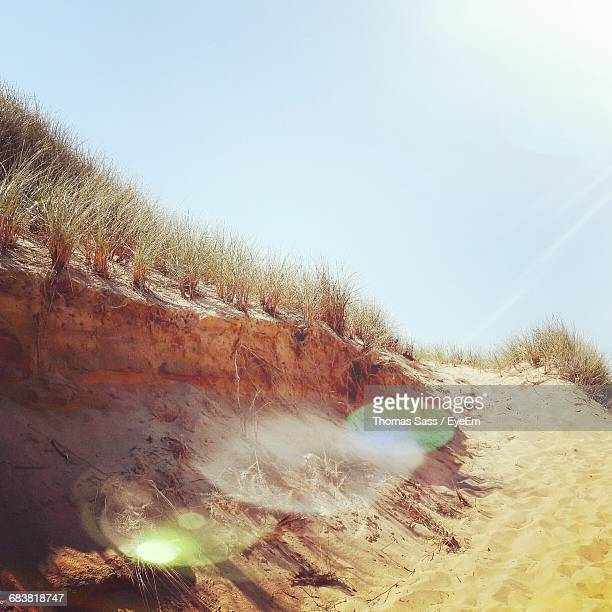 Close-Up Of Grass On Sand Dune At Beach On Sunny Day