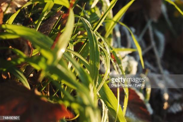 close-up of grass - drazen stock pictures, royalty-free photos & images