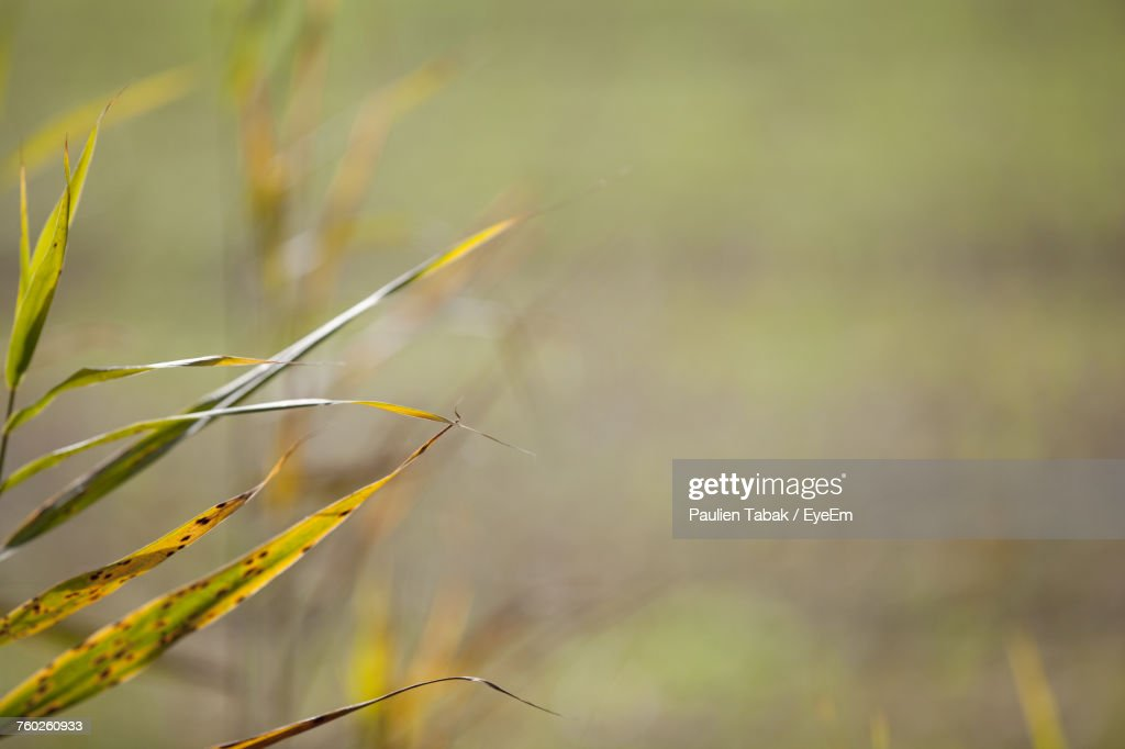Close-Up Of Grass : Stockfoto
