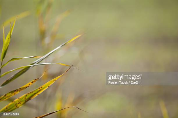 close-up of grass - paulien tabak stock pictures, royalty-free photos & images