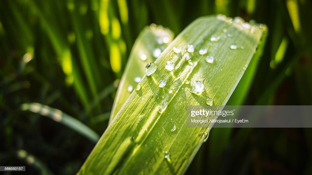 Close-Up Of Grass With Water Drops : Foto de stock