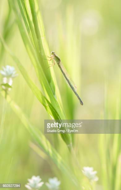 Close-Up Of Grasshopper On Grass
