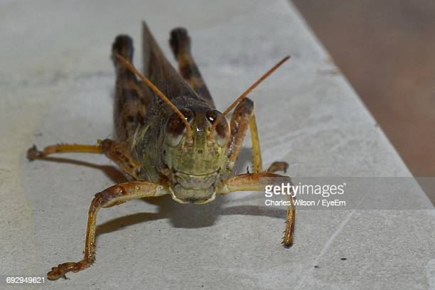 Close-Up Of Grasshopper On Retaining Wall