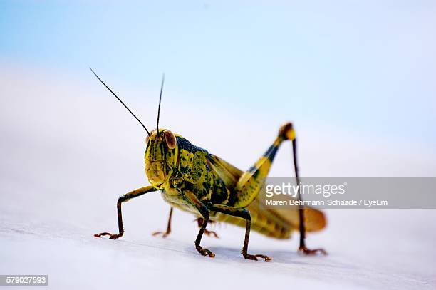 Close-Up Of Grasshopper Outdoors