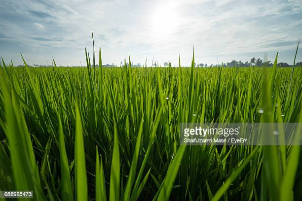 close-up of grassy field - shaifulzamri stock pictures, royalty-free photos & images