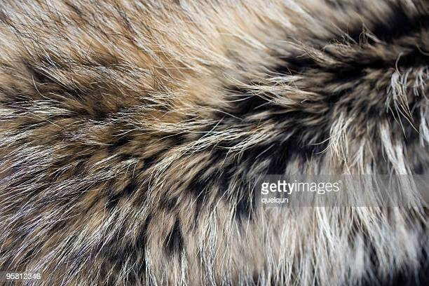 Close-up of gray black brown luxury animal fur