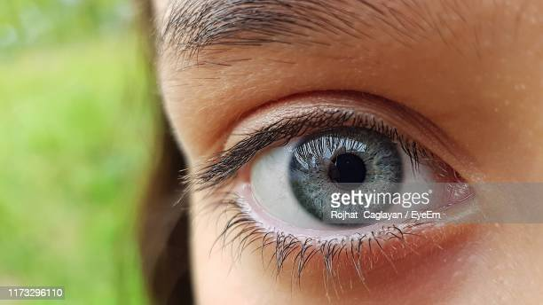 close-up of gray eyes - gray eyes stock pictures, royalty-free photos & images