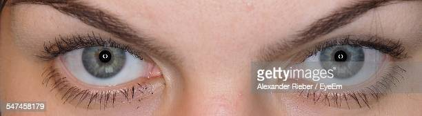 close-up of gray eyes - grey eyes stock pictures, royalty-free photos & images