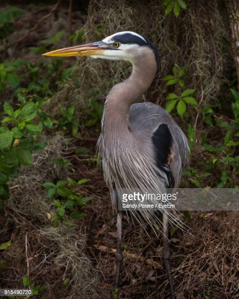 Close-Up Of Gray Heron Perching On Plant