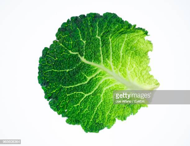 close-up of green cabbage leaf over white background - cabbage stock pictures, royalty-free photos & images