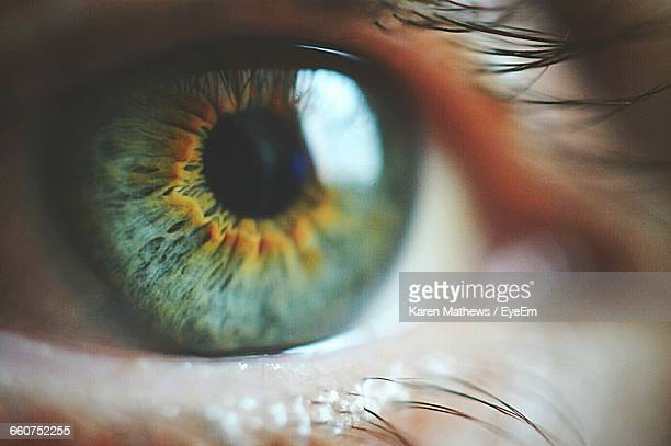 close-up of green eyes - extreme close up stock pictures, royalty-free photos & images