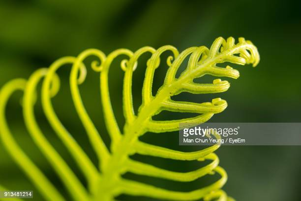 Close-Up Of Green Fern