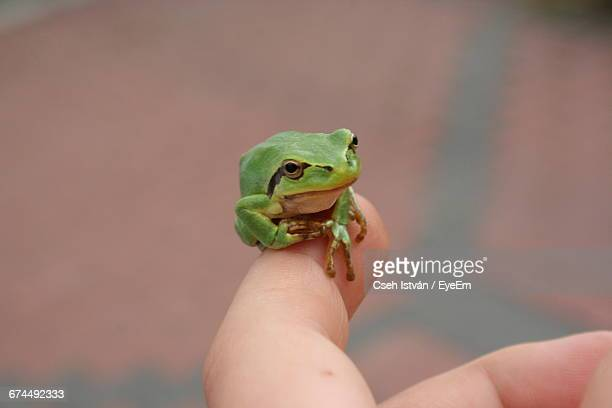 Close-Up Of Green Frog On Woman Finger