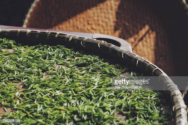 close-up of green herbs - dried tea leaves stock photos and pictures