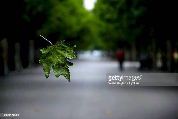 Close-Up Of Green Leaf Falling On Street