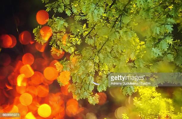 close-up of green leaves against blurred background - adriana duduleanu stock photos and pictures